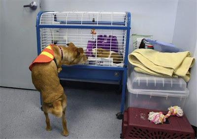 Trained dog