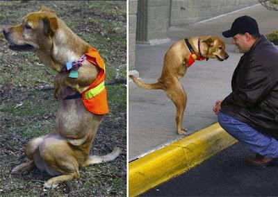 Perra Ejemplo de vida + Proteccion animal