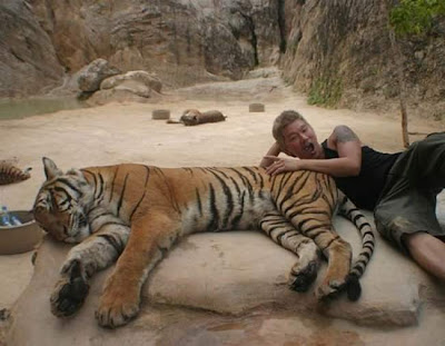 Tiger Temple in Thailand