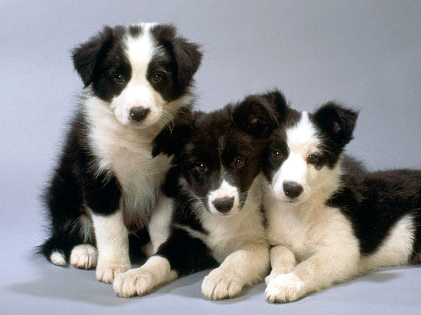 hunder som er søte