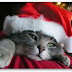 Freeware e servizi online dedicati al Natale