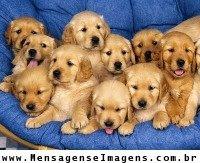 http://animaldeestimacao-amor.blogspot.com