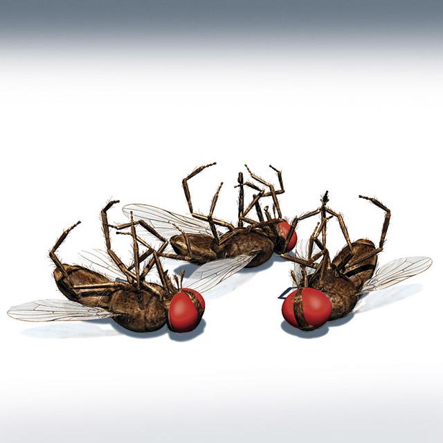 eliminar insectos: