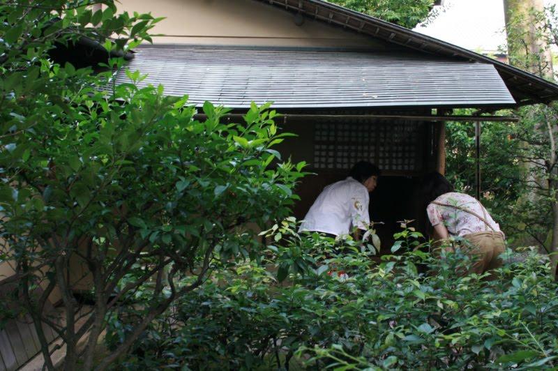 Tales Of Japanese Tea  Zen Temple Kenninji In Kyoto