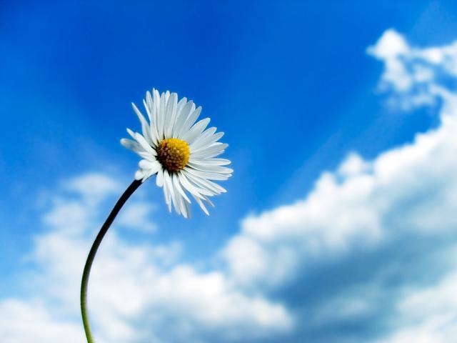 Berikut beberapa bunga yang dengan arti: