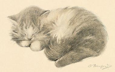 How Long Should A Cat Nap Be