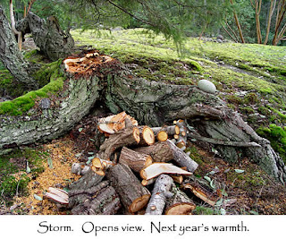 Storm damaged tree on our property, photo by Robin Atkins