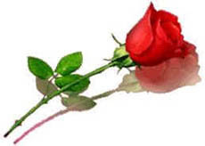 Be My Valentine Forever - Valentine Day Special: One Perfect Rose