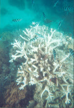 Great Barrier Reef Austraila
