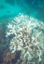 Great Barrier Reef Austraila