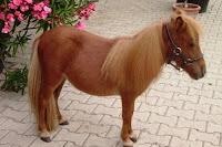 poze cool ponei