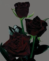 poze avatare trandafiri negri