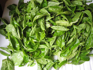 big pile of washed basil leaves