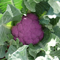 Purple Cauliflower ©Tyler Storey