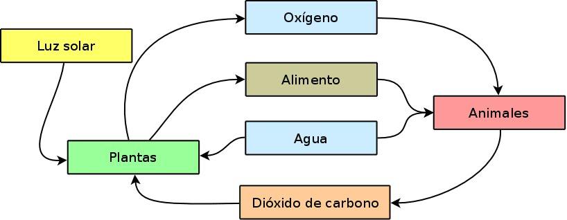 CIENCIAS BIOLOGICAS ECOSISTEMAS