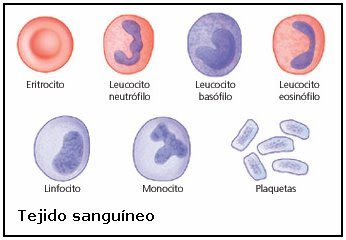 células del tejido sanguíneo