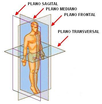 Planos anatómicos
