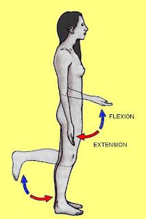 movimientos de flexión y extensión