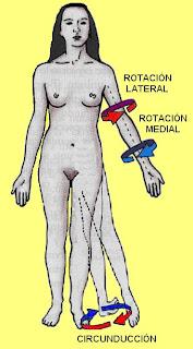 movimientos de rotación y circunducción