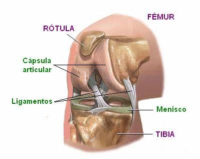 Vista lateral de la articulación de la rodilla