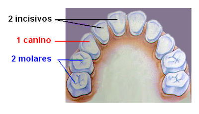 dentición temporaria
