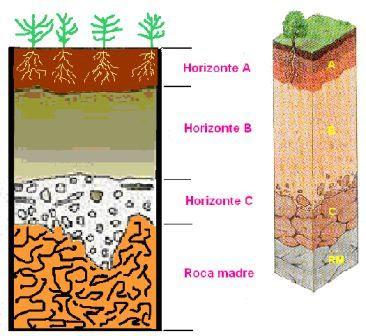 Ciencias biologicas componentes abioticos del ecosistema for Como esta constituido el suelo