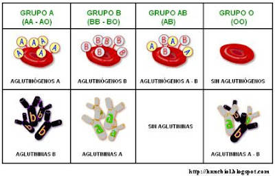 antígenos y aglutininas de cada grupo sanguíneo