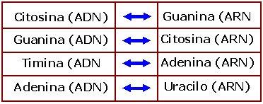 inserción entre bases nitrogenadas