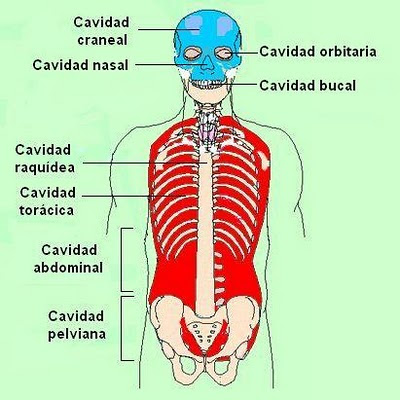 cavidades del cuerpo