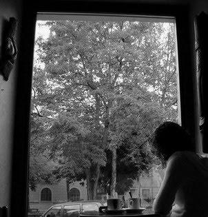 Tit atrapado en una ventana de poder