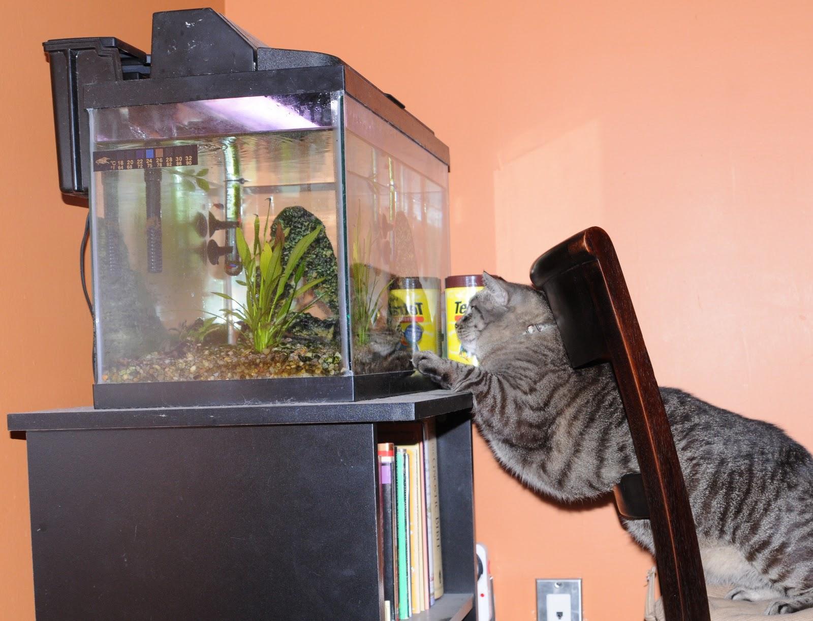 Coffee with cats fish tank fun for Fun fish tank