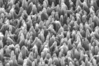 A scanning electron microscope image of plastic fibers grown on a sheet of transparent film. Ohio State University researchers have invented a technique for carpeting a surface with tiny plastic fibers. The fibers can be made to attract or repel water and oil. Image courtesy of Ohio State University.