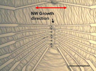 Caption: Nanowire electronics: Optical image shows metal electrodes attached to zinc oxide nanowires using the NIST technique. Dark spots near the center are the gold pads that start nanowire growth; red arrow shows direction of growth. Scale bar is 50 micrometers long. Credit: NIST. Usage Restrictions: None