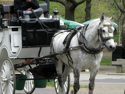 carriage horses in Central Park