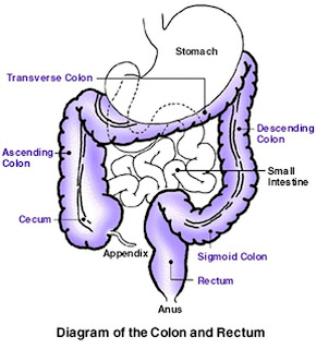 Stomach colon rectum diagram