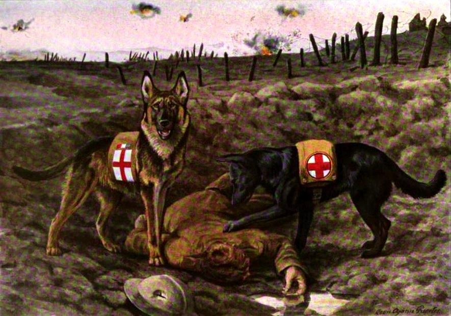 German shepherd dog and Belgian shepherd dog