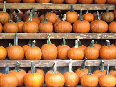 Wall Of Pumpkins Halloween