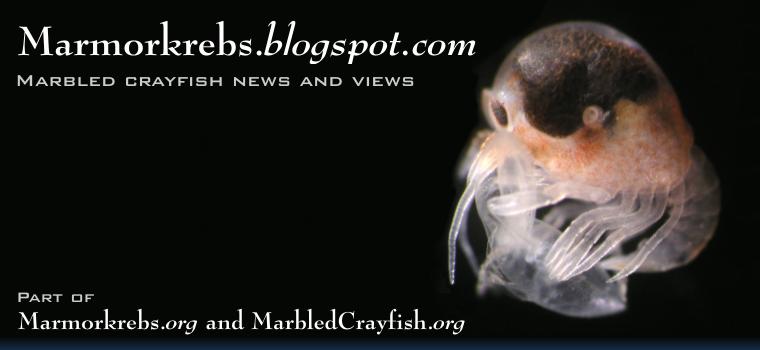 Marmorkrebs