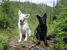 To treningsvenner av lex