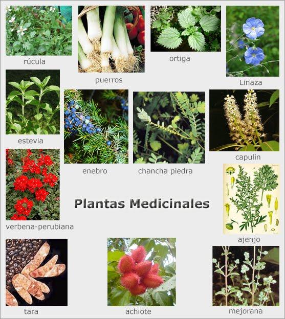 Loco mundo ej rcito de plantas for Tipos de plantas aromaticas