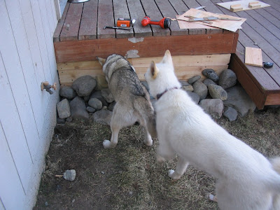 We want out, we want out!! Oskie on Left, Jasper on right