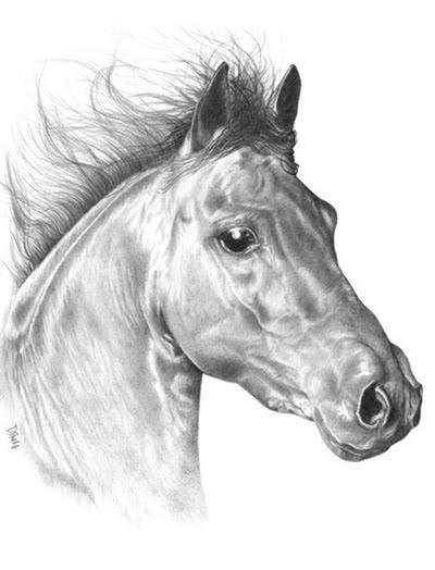 Horses too!