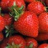Quick Recipe: Creamy Strawberry Daiquiris