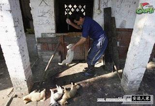 Pict: Proses Pembuatan Dendeng Anak Anjing di China