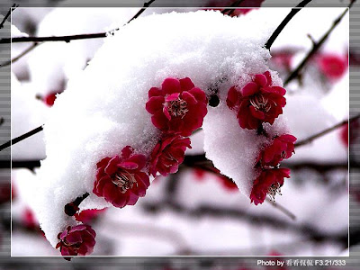 Image result for Flowers with Snow