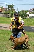 usaha melatih anjing