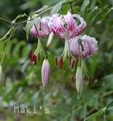 2009 見て欲しい花たち
