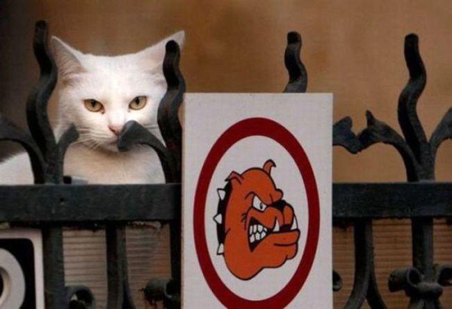 кот злой как собака