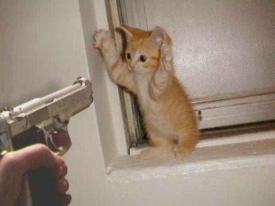 funny cat wallpaper. Cat Burgler Funny Image