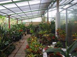 Green House untuk cegah GLOBAL WARMNG